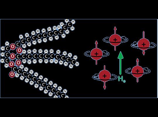Oracle快速脂肪分析系統藉以突破性NMR技術,可快速測定脂肪成份